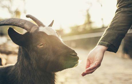 hand die geit voert